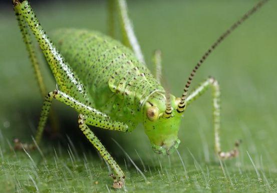 rüyada cırcır böceği görme