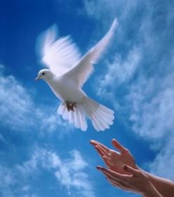 rüyada hürriyet bağışladığını görmek